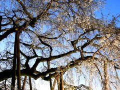 小さな旅●岡崎市・奥山田のしだれ桜 09