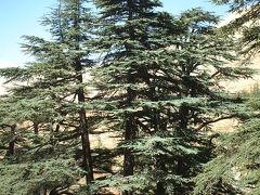 レバノン杉で森林浴♪