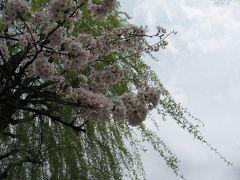 お花見 東大から上野 (作成中)