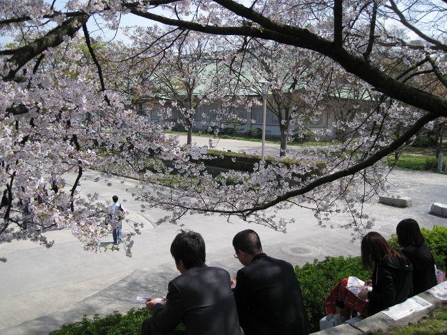 今日は少しかすみがかった晴天。<br /><br />檜花粉で目がかゆ〜いにもかかわらず<br />お昼に大阪城まで足をのばしました。<br /><br />サクラもいい感じになってきました。<br />その分人も多め<br /><br />