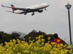 飛行機だ~ 桜だ~ 『さくらの山』 in成田