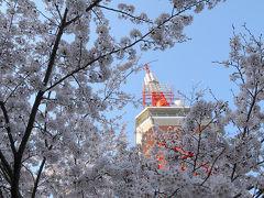 宇都宮市・八幡山公園の桜 2009。