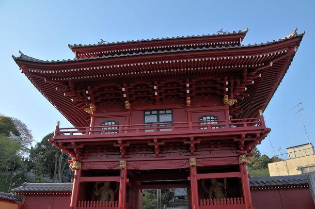 八幡山公園に向かう前に慈光寺へ。<br />ここの桜は早く咲いてしまうので、花見というより新しくできた赤門を見るために寄りました。今年も例年のごとく4月頭に満開を迎えていたそうです。<br /><br /><br />慈光寺は県庁前通りの、県立図書館のちょうど裏側にあたる場所にあるお寺です。通称「赤門の桜」と呼ばれるヒガン桜が有名です。このヒガン桜は樹齢150年を超えて、宇都宮市内で一番早く咲き始める桜です。今年は赤門とともにライトアップも行われます。<br /><br />江戸時代(1778)に宇都宮城の鬼門である北東の位置の慈光寺に朱塗りの門が造られました。第二次世界大戦で、宇都宮はアメリカの爆撃機(B29)により大空襲を受けています。その際に赤門は焼け落ちてしまいました。<br /><br />そして60年の月日がたち、開山500年の事業として修復されました。正直、赤門から前の参道はないに等しいので残念なのですが立派な門が修築されました。