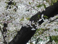 2009年お花見昼食会