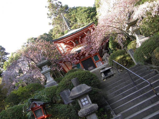 「京都」の旅を思い返して<br /><br /><br />今回は寺院めぐりを中心とした観光旅行になりました。<br />旅行記の作成途中ですが、「京都」を思い返すと、<br />歴史がある寺院が在り、<br />綺麗に育てられた草花が在り、庭園が在り。<br /><br />一輪の花や建築物の細部に目を向けるのも<br />楽しみではありました。<br /><br />よくよく思い浮かべると、建物の内に入ることができ、<br />その角度から庭園を眺める景色が<br />心に残っている感じがありました。<br /><br />天龍寺しかり、龍安寺しかり、醍醐寺しかり。<br /><br />パシャパシャと下手な写真しか残せませんでしたが、<br />そんな景色が良かったんだだなと思えます。<br />醍醐寺の三宝院庭園などは、写真撮影が禁止でしたが、<br />その分、その建物からの眺めが素晴らしくも思え、<br />心にも残っている感じもします。<br /><br />歴史的な建物、庭の景色も変遷があったかもしれません。<br />そこに外国人も交え、現代人の姿があったとしても、<br />これぞ「京都」の魅力ではないかと思えました。<br /><br />これから行かれる人は、<br />よかったらそういう情景も楽しんでみてはと思います。<br /><br />自分の中にも「京都」再訪をしたいなという思いが<br />こみ上げてきました。<br /><br />===========================<br /><br /><br />高校の修学旅行以来、約20年ぶりの京都。<br />高校時代からの友人と行ってきました。<br /><br />ただでさえも、一人旅が好きな自分。<br />今回の同行者は、<br />「タクシーをチャーターして観光したい」<br />「一見さんOKのお店で舞妓さんに会いたい」<br />などなど、ボクからしてみれば、<br />ジジ臭くて、くだらない話しをしつこくしてくる。<br /><br />そんなこともあり、1泊3万円以上も出すなら、<br />アジア一人旅に出たほうが全然良い!なんて思っていました。<br /><br />と言うわけで、下調べもほとんどせず、<br />前日にある程度の予定を組み、<br />現地移動中に我侭に希望を言われるなど、<br />散々な状況に。<br /><br />今回はお荷物同行者がいたので、<br />駆け足ながらも、少しゆっくり目の観光。<br />そして何時もよりサイフの紐も緩んだ感じとなりました。<br /><br />桜と春のライトアップの時期を過ぎ、<br />晩春という半端な時期という感じでしたが、<br />過ごしやすい草木の輝く黄緑色を楽しめる頃合でした。<br /><br />今回の旅は・・・<br />JR東海ツアーズで申し込んだ、<br />レール&ホテルで32000円くらいの旅です。<br /><br /> 1日目<br />  天龍寺、龍安寺、銀閣寺、鞍馬、貴船神社、<br />  河原町、先斗町〜祇園あたりブラブラ<br /> 2日目<br />  醍醐、宇治、伏見<br /><br />個人的に一番、良かったなと思い、<br />他のトラベラーにお勧めしたいのは、醍醐寺です。<br /><br />伽藍、霊宝館、三宝院庭園と3つに分かれていて、<br />それぞれの見学には各600円かかりましたが、<br />共通券の1500円を購入。<br />たまたまだったのですが、上の順番で見たことも<br />それぞれの魅力を良い具合に、<br />感じることができたようにも思います。<br /><br />旅全体は良かったと言えるのですが、<br />鬱陶しい同行者がいない方が、<br />尚更良かったと思います。<br /><br />やっぱり一人旅がいい!<br />やはり海外旅行の方が刺激的!<br />などとも再認識もしてしまいました。<br /><br />が、日本国内でも、魅力や刺激があるところは<br />まだまだ沢山あるはず。<br />次は一人旅で、その魅力を探りたいものです。<br />