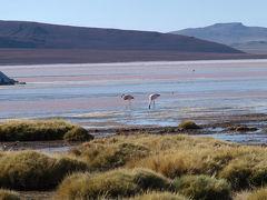 サン・ペドロ・デ・アタカマからラグ−ナ・コロラドまで (11)San Pdero de Atacama to Lagoon Cololado   -   Chili & Boloivia