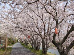 ☆春の海、御前崎と牧之原大茶園、そして桜並木
