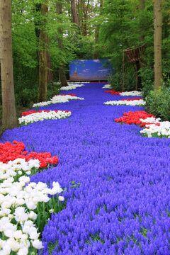 ■オランダの旅(5)★キューケンホフ公園