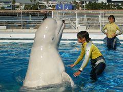 2008 お台場→横浜プチ旅行☆ ~イルカに癒されて♪~