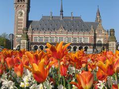 春のオランダ・ベルギー花紀行9日間(2) ◇◆ハーグ編◆◇