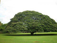 日立・この木なんの木公園(オアフ島のモアナルア・ガーデン)