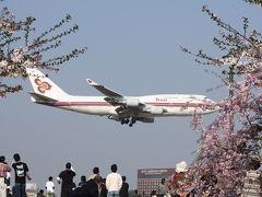 桜と飛行機のコラボ in成田 さくらの山