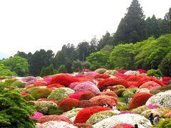 箱根:5月の「山のホテル」はツツジとシャクナゲに囲まれて…NO.2