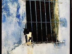 Les chats @ Maroc
