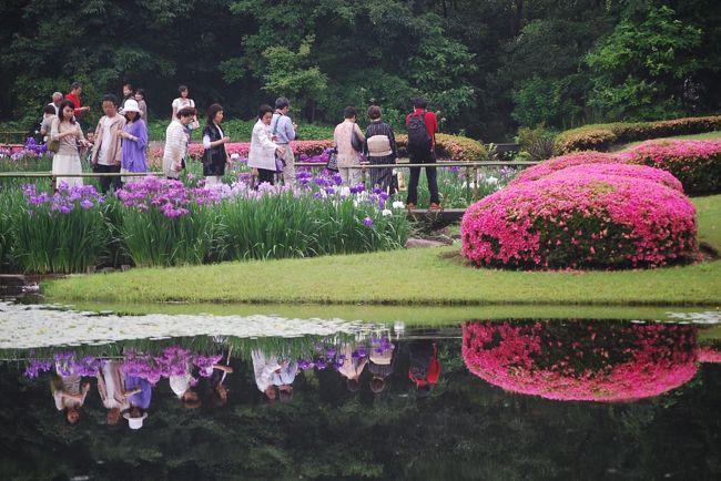 5月31日、昼頃に雨天の下の皇居・東御苑を訪問した。<br />2日前に東御苑の花便りを見て菖蒲の花とサツキが見頃であることを知り、菖蒲の花とサツキを撮影するために訪問した。<br />生憎、雨が降ったり止んだりの天気であつたが、大勢の人が写真撮影や花を観賞するために来ていた。<br />サツキについてはやや盛りを過ぎていたが、菖蒲の花は丁度見ごろであった。<br />皇居・東御苑には雨宿りや昼食を取ったりして約2時間滞在した。<br />此処では次のとおり三部に分けてまとめる<br />?二の丸庭園での花菖蒲とサツキ鑑賞<br />?本丸跡での散策<br />?山野草と花木鑑賞<br /><br />*二の丸庭園の菖蒲の花とサツキの花とが美しい風景を造っていた。