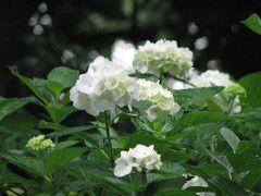 初夏を彩る菖蒲の花を見に皇居・東御苑を訪問?大手門~本丸跡での散策