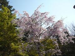 円山公園周辺