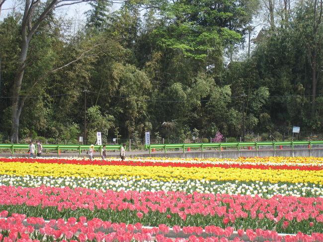4月快晴 <br />初めて行ってみました。<br />もう少し 早く行くと桜と両方 楽しめそうです。