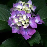 ひとり旅 [562] 花みどり公園<アジサイの花も咲いていました>広島市安佐北区