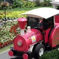 ひとり旅 [564] 大山と蒜山へ?<とっとり花回廊 色とりどりの花>鳥取県南部町