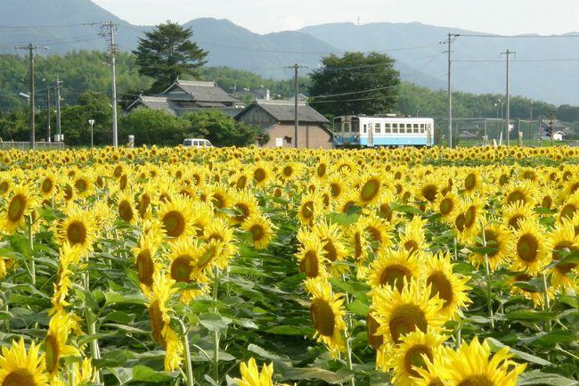 2009年、いよいよ夏ですね。<br />夏のシンボルの花は向日葵。香川県内では<br />およそ25万本の向日葵を植栽している、<br />まんのう町を訪れました。<br />9年前に旧仲南町が町おこしの一環として<br />始めたものです。<br />なお、向日葵は全て食用です。