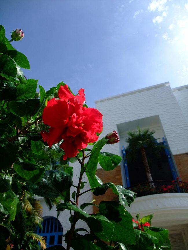 今年はサムイに7泊したので、とてもゆっくり。<br /><br />3日目と4日目にやっと青空が!!<br /><br />ホテルからほとんど出ずに、2日間とも夕方まで過ごす☆