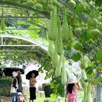 名古屋◆街ある記 名古屋市農業センター・ヒョウタンのトンネル