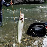 九州の清流、番匠川で「鮎のちょんがけ漁」体験