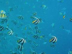 2009 モルディブ ビヤドゥ  The underwater world and・・・