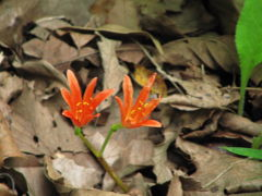気になっていた向島百花園に夏デビュー(2)百花園の名にし負う、園内の夏の花たち