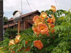 夏の花咲く 江面村(久喜市)