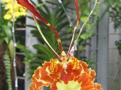 2009夏、名古屋市ランの館(1):8月15日(1):バンダ、ファレノプシス、オンシジュウム