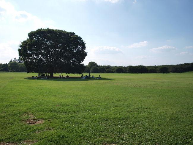 朝早くから立川駅近くにある昭和記念公園に行きました。<br />この公園は昭和天皇即位50周年記念事業の一環として米軍基地の跡地の<br />一部につくられた国営公園です。<br /><br />大きさは149ha。ディズニーランド3個分、東京ドーム32個分!<br /><br />広大な敷地に、森・原っぱ・湿地・庭園・巨大遊具などがあり、<br />どこに行っても楽しく過ごせる場所でした。<br /><br />サイクリングコースで各所を回るといろんな景色に出会えます。<br />特に、雲の海・ふわふわドーム(膜状のトランポリン)は2,3歳からの<br />子供さんから大人まで楽しめる遊具でした。<br />オススメです。