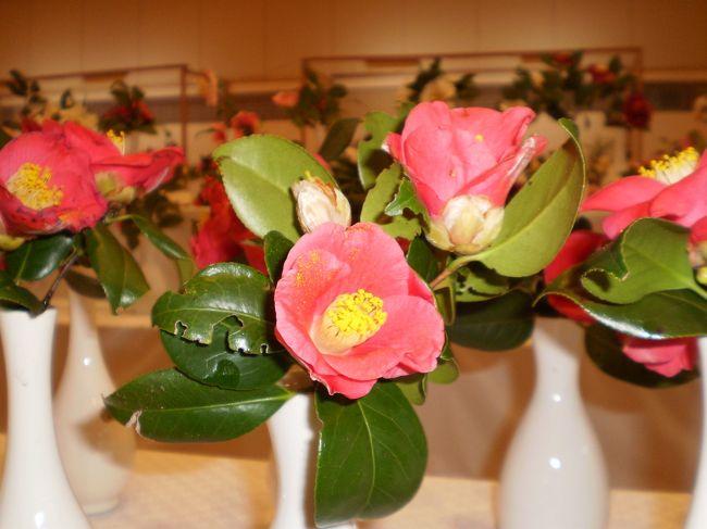 2009年2月7日〜8日1泊2日で椿祭りに行ってきました。<br />椿は、まだまだでしたが、穏やかな伊豆大島を探訪してきました。