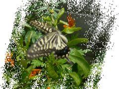 自然・動植物