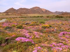 南アフリカ・ナマクワランドの花々の旅 0・・旅いつまでも・・