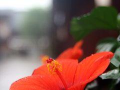 ひとり旅 [596] 雨の中、ひがし茶屋街を歩く「明治初期の建築、茶屋様式の町並み」石川県金沢市