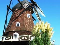 アンデルセン公園-8 パンパスグラスの花穂開くとき ☆風車の周りで
