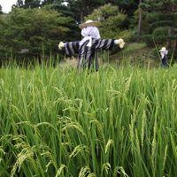 京都 水景園