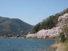 雲一つない晴天の下、湖面に煌く海津大崎の桜並木に見惚れて