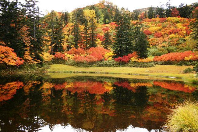 シルバーウィーク、どこに行こうか♪<br />って、それは6月にすでに決まっていた!<br /><br />6月28日の「第71回大雪山山開き縦走登山会」に参加したとき、秋にもう一度登ろうと決めた。<br />大雪山系の秋は早く、9月に入ると同時に紅葉の便りが聞こえてくる「日本一」紅葉の早い場所なのです。<br />見ごろは例年、9月中旬、秋分の日あたりかな~。<br /><br />あらっ、今年は連休じゃん!<br />何々、5月の連休に対抗して「シルバーウイーク」というのね。<br />まぁ、そんなことはどうでもいいけど、せっかくの連休、見ごろの大雪山紅葉を見ない手はない!と、行ってきました大雪山、歩いてきました大雪山。<br /> ★1日目(20日)…紅葉の高原温泉沼巡り<br /> ★2日目(21日)…赤岳~白雲岳~北海岳~黒岳縦走登山<br /> ★3日目(22日)…旭岳・姿見~裾合平~中岳温泉<br /> ★4日目(23日)…白金温泉「青い池」、美瑛丘巡り<br /><br />9月9日には早くも初冠雪があり、寒さ対策も準備万端怠りなく20日~23日の4日間思う存分紅葉を満喫してきました~。v(o゚ェ゚o)<br /><br />紅葉もピークだけど、人出もピークで、山登りに行列をするという始めての経験もしましたよ~(笑)<br /><br />でもでも、大雪山の紅葉、本当に『最高』ですよ~!!!<br />溜息と感動の言葉しか出ません。゚+。゚★感・・(ノ)゚∀゚(ヾ)・・激★゚。+゚<br />今回は写真の枚数が半端じゃないです。<br />どれを載せたらいいのか困るくらいなので、とりあえず載せられるだけ載せちゃいます。(それでも全部じゃないけど…)<br /><br />昨年は、この時期紅葉を求めて「カナダ・メープル街道」までわざわざいったんだったっけ…<br />残念ながら、紅葉には早くて紅葉のはしりを見てきた感じだったけど、カナダまで行かなくてもこんなに近くに最高の場所があったんだよね~♪<br /><br />あまりの色鮮やかさに目が疲れますので、程々ににご覧くださいませ~。<br />(@^▽^@)