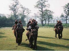ネパール旅行① トリスリ川ラフティングとチトワンで象にのってサファリ!