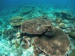 モルディブの海 バア環礁 スノーケリング