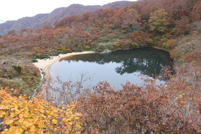 夜叉が池は20年ほど前に行ったきりです。<br />rokoさんの旅行記<br />『悲しい伝説の池、「夜叉が池」 夜叉姫に出会えるか』<br />http://4travel.jp/traveler/roko8781/album/10381435/<br />を拝見していて、とっても夜叉が池に行きたくなりました。何度か訪れたことがある夜叉が池ですが、秋の紅葉は初めてでした。20年前とはずいぶん変わっていました。当たり前ですね。だって、20年も経てば木だって幹も枝も大きくなってしまいますものね。木道も整備され、パトロールの方もいらっしゃいました。<br />しかし、夜叉が池の全体の形や山々の迫り方、登りのつらさは一緒でした。今回のほうがつらさはやっぱり増していますね。最後30分ほどの急な坂だと思っていましたが、ずっと急な坂で2時間ほどひいひい言いながら登ったような気がします。<br /><br />