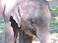 今年も象保護センターに行ってきましたぁ。