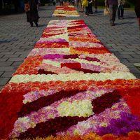 馬見丘陵公園にダリアの花絨毯