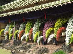 錦なす花の終わりの菊だより(4)新宿御苑の菊花壇展2009・前編