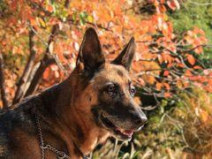 愛犬の散歩とバードウォッチング