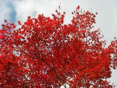 富士霊園の紅葉2009