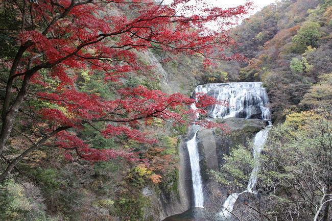 袋田の滝でハイキング&バードウォッチング [2009](1)